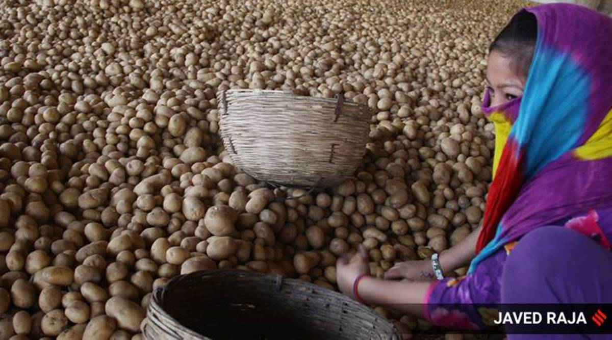 Monthly average price of potato Rs 40/kg, highest in a decade