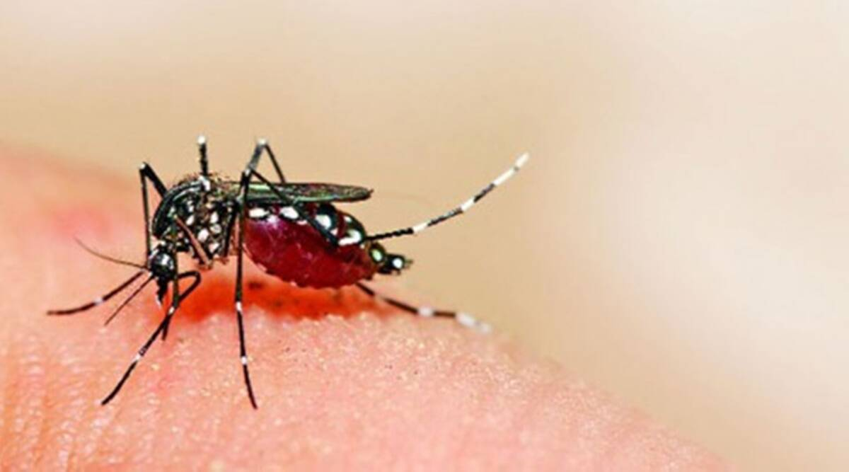 Malaria, Dengue and Chikungunya: Causes, symptoms and their biggest differences