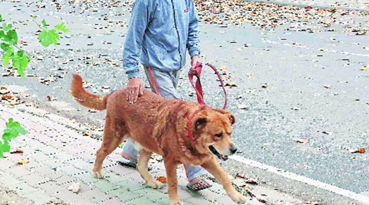 Chandigarh Municipal Corporation seeks Animal Husbandry dept's opinion over allowing ferocious breeds of dogs as pets