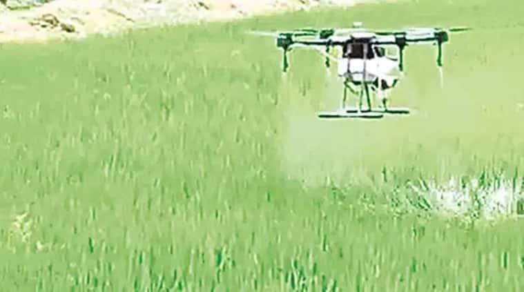 To Combat Locust Attacks: Haryana uses drones to spray pesticides in Hisar, Mahendragarh