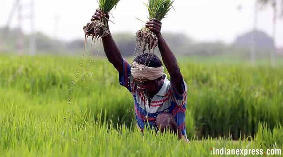 India farm sector, India farm sector growth, India GDP, India GDP contraction, India news, Indian Express