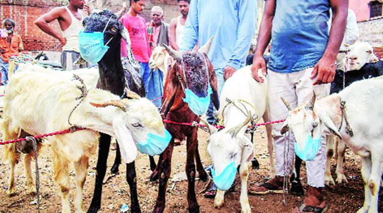BJP MLA, animal sacrifice, bakrid celebration, Nand Kishor Gurjar, Indian express news