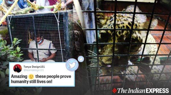 karnataka, forest official goes down well, leopard rescue from dry well, rfo go down well in cage, leopard rescued from dry well, nagarahole tiger reserve, viral news, indian express