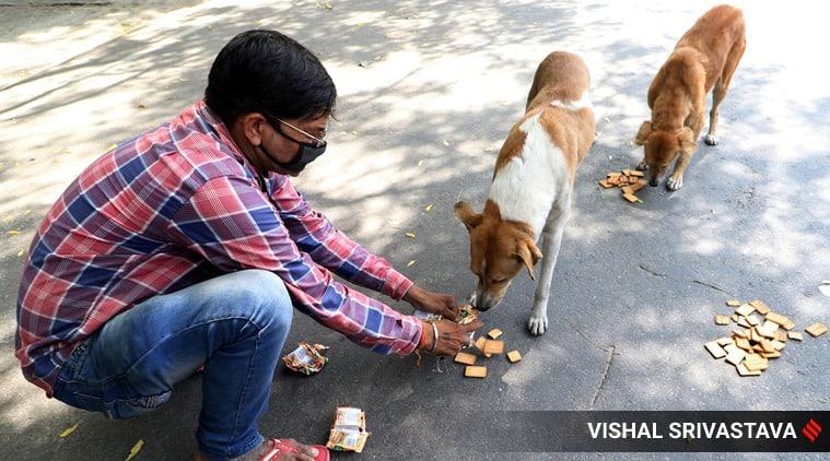Dog feeding without accountability