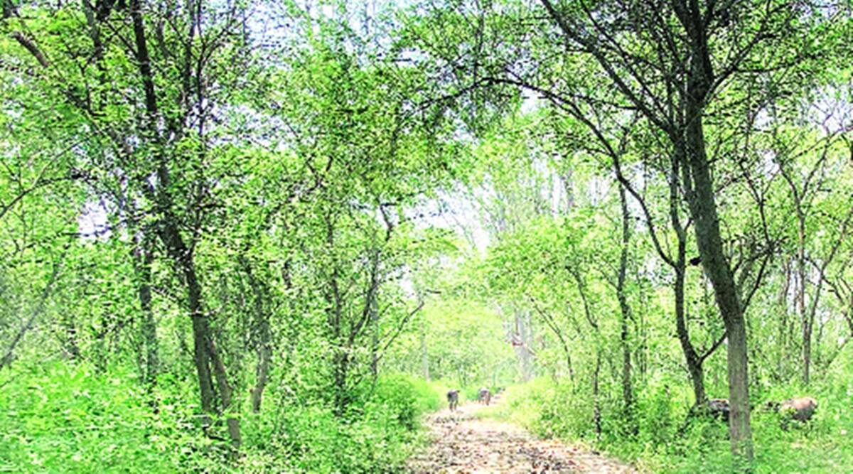Wildlife Institute of India, Wildlife Census Haryana, Haryana forest department, Haryana news, indian express