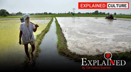punjab, haryana, southwest monsoon, monsoon news, monsoon forecast, punjab rainfall, punjab paddy cultivation, haryana monsoon forecast, haryana paddy