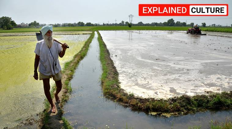 punjab, haryana, southwest monsoon, monsoon news, monsoon forecast, punjab rainfall, punjab paddy cultivation, haryana monsoon forecast, haryana paddy