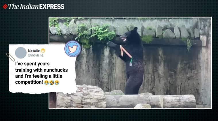 Bear, Bear videos, Nunchuck, Bear with nunchuck, Karate bear, Martial art bear, Viral videos, Trending news, Indian express news