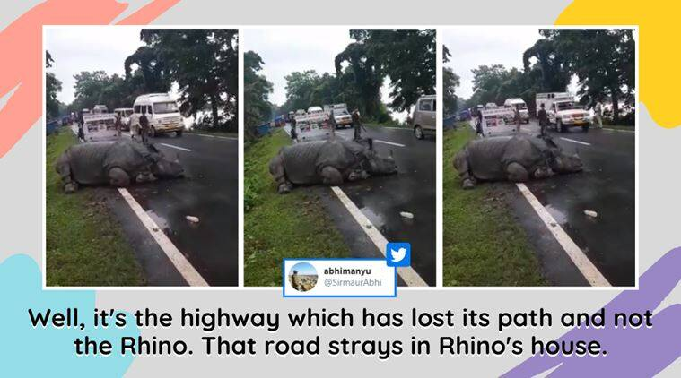 assam flood, assam kaziranga national park, rhino kaziranga highway, rhino resting nh 37 highway, rhino assam flood, rhino rescue, indian express, assam news