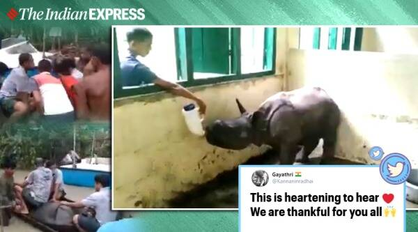 assam floods, kaziranga rhino calf rescue, baby rhino rescue assam flood, rhino calf recovering assam, baby rhino drinks milk bottle, viral videos, assam news, indian express