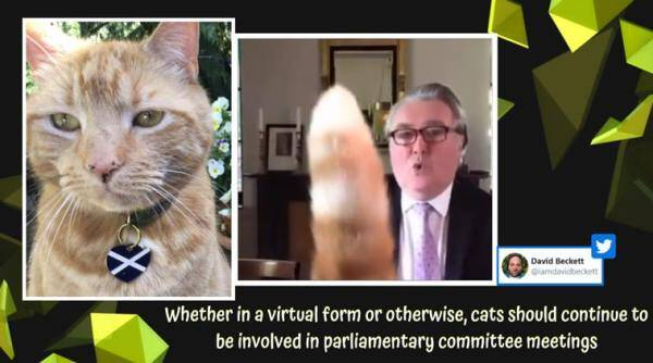 cat british parliament meeting, scottish mp cat interrupts parliament committee meeting, John Nicolson cat parliament meeting video, cat UK parliament meeting, cat photobomb zoom call, viral news, indian express