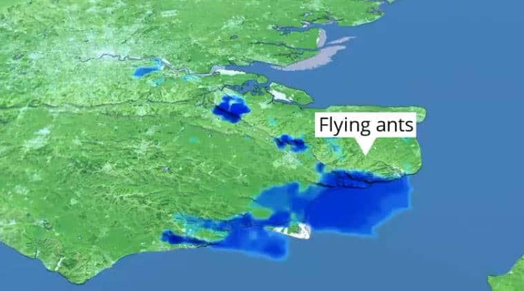 UK flying ants, flying ants UK, UK swarms of flying ants, swarms of flying ants UK, World news, Indian Express