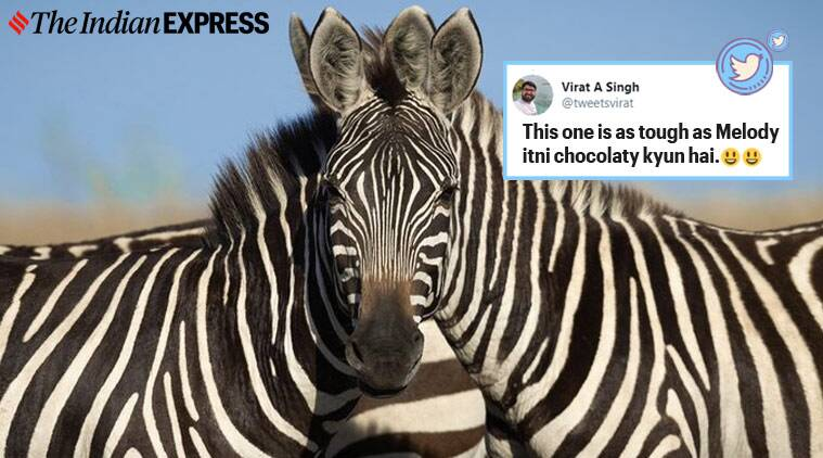 zebras puzzle, zebra optical illusion, which zebra in front, optical illusions, internet puzzles, viral optical illusion, viral news, indian express,