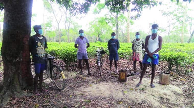 assam tea garden workers, coronavirus assam update, covid 19, assam workers covid positive, indian express