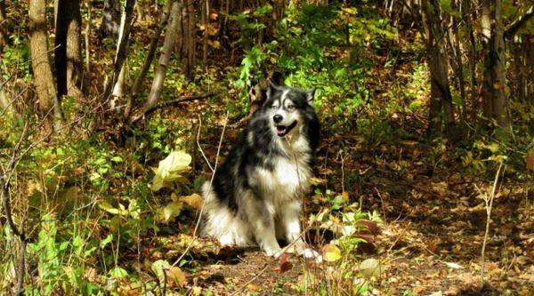 Pet dog taken to vet with sore paw in Canada, accidentally euthanised