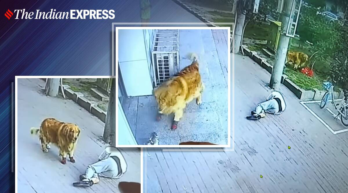 cat falls on man's head viral video, dog chases cat, china, trending, viral video, indian express, indian express news