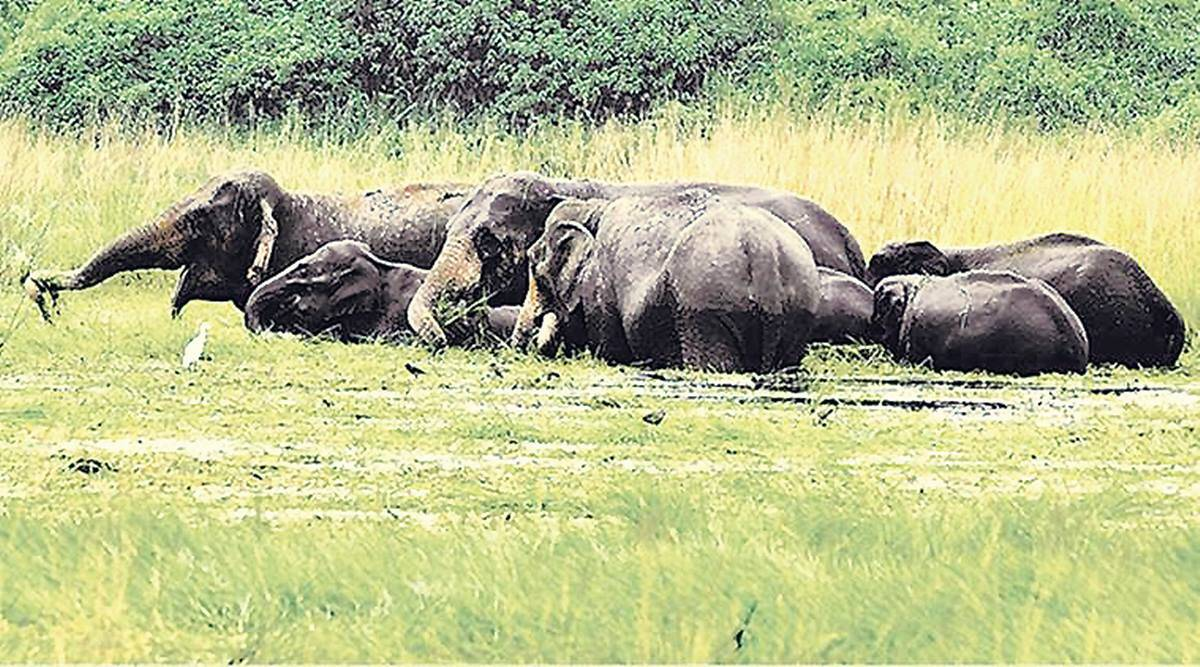 Eco conflict cost: over 1,000 jumbos, 4,000 people in 10 years