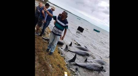 Mauritius, Oil Spill, Dolphins