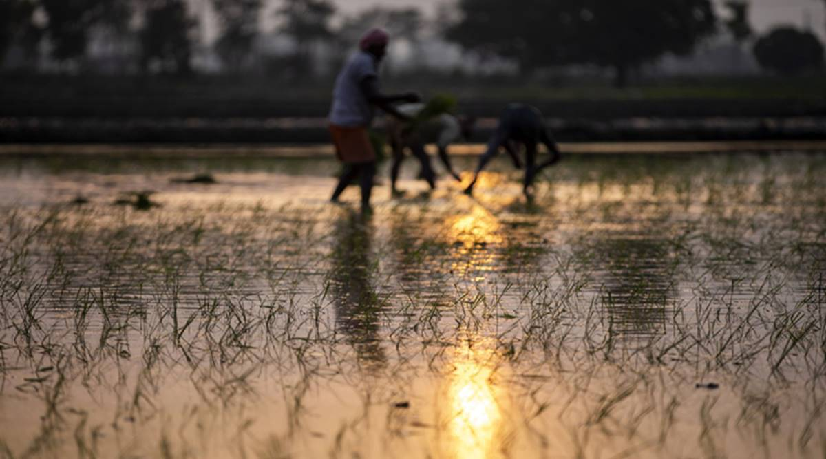 Rural distress looms: dip in crop prices, remittances; rising Covid cases