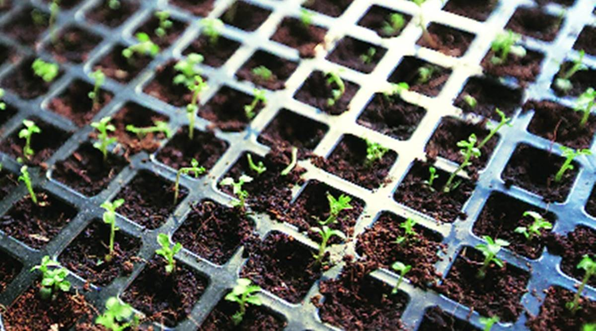 pune Territorial Army, pune army plant saplings, Pune city news, pune southern command