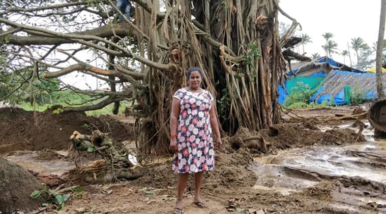 Goa news, Goa banyan tree, Goa trees, 200 year old banyan tree goa, goa most famous banyan tree, Indian Express