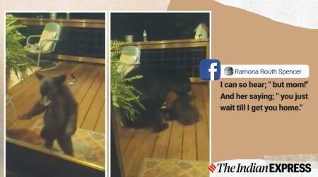 bear cub north carolina home, bear cub mother porch video, mother bear scolds cub home porch, viral news, cute animal videos, indian express