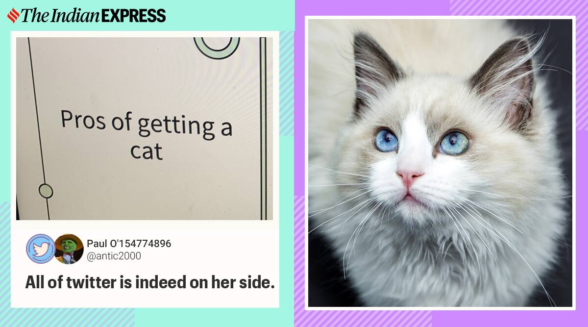 girl power point for getting a cat, girl make ppt for adopting pet, pet adoption quirky presentation, PPT for cat adoption, ppt for pet cat, quirky power point presentation, Indian express, trending news,