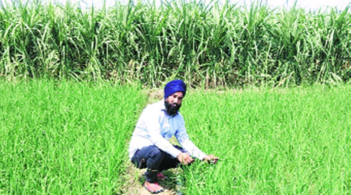 Punjab farmers, Soil Health Card, Chandigarh news, Punjab news, Indian express news