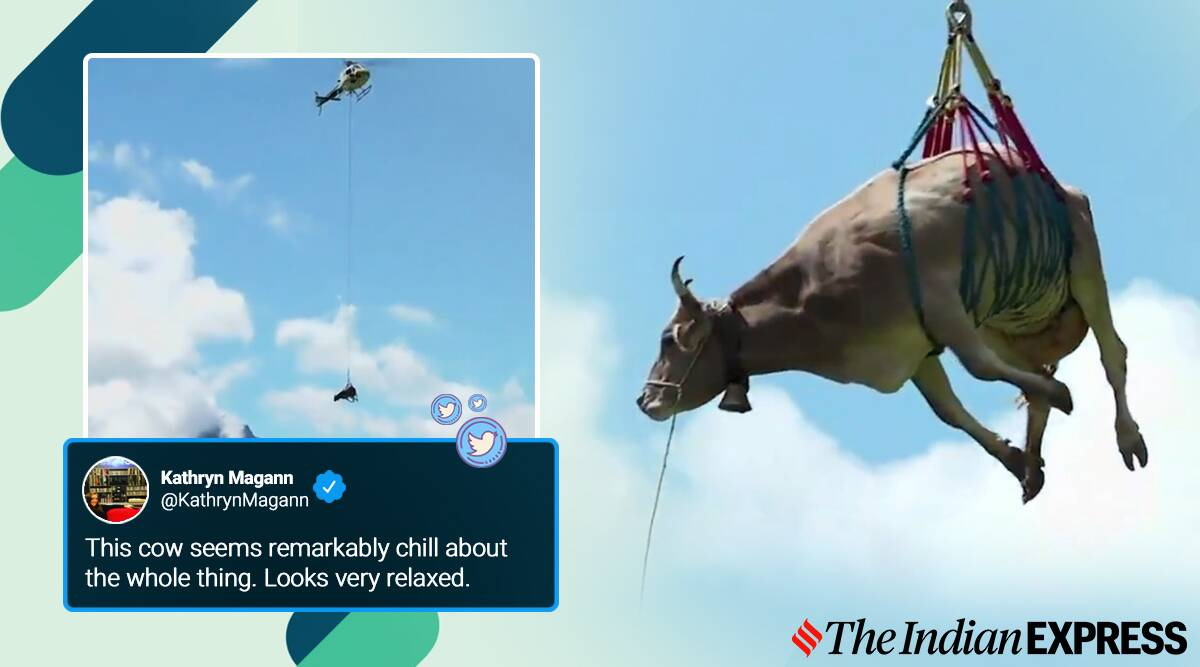 swiss farmer flying cow airlift, farmer airlifts cow viral video, trending, indian express, indian express news