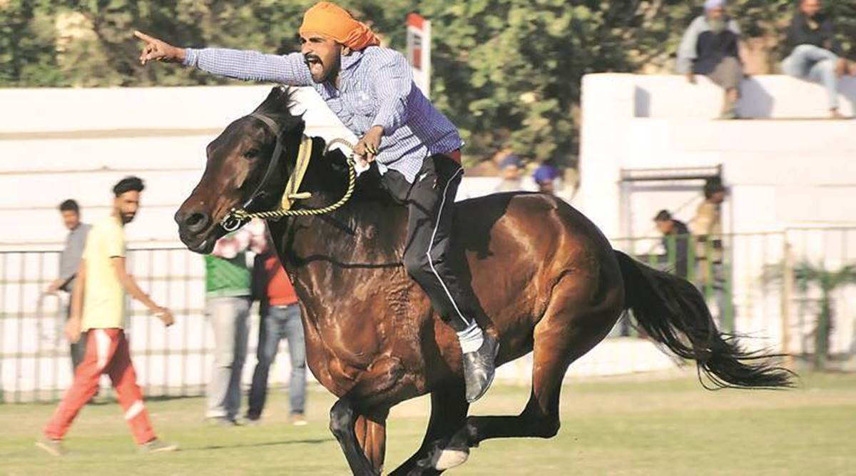 Gujarat Govt To Reopen Horse Riding Schools In 10 Districts Cities News The Indian Express