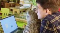 'Owls are the new cats': Russian cafe allows guests to interact with pet birds