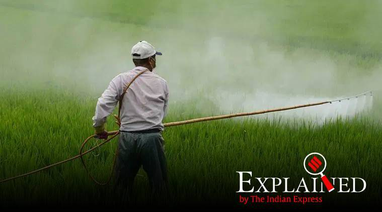 Punjab, Punjab farmers, punjab pesticide use on crops, punjab crops, indian express
