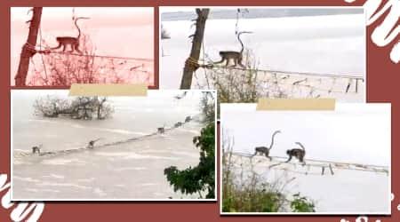 karnataka, karnataka rains, karnataka floods, monkeys rescued tungabhadra river, monkeys rescued rope bridge, karnataka forest official rescue stranded monkeys, viral news, indian express