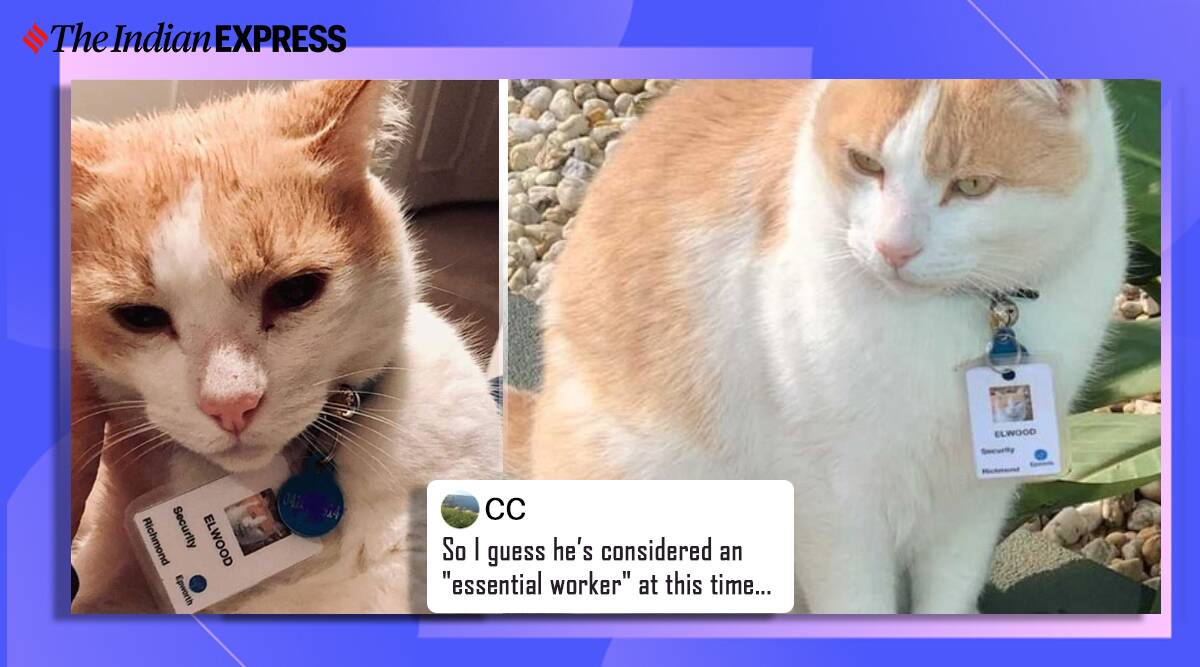 hospital hires cat as security officer, Australia hospital hires cat as security guard, Epworth Hospital, cute cat, viral cats, trending, indian express, indian express news