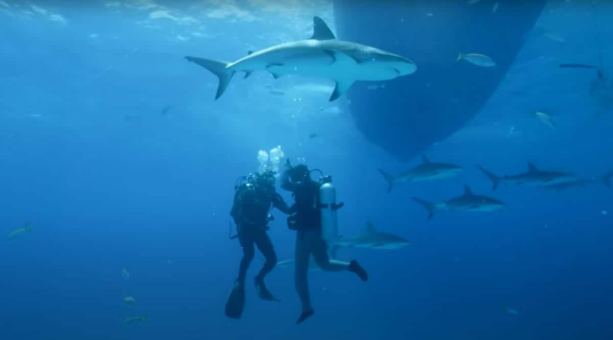 shark human vs fish blood experiment viral video, shark attack, shark human attack, YouTube, trending, indian express, indian express news