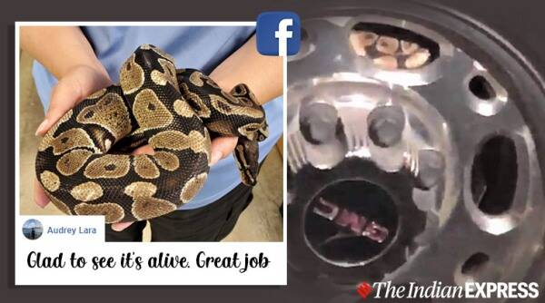 Snakes, Snake rescue, Python, Python inside car, Python rescue, Roswell Police Department, Trending news, Indian Express news.