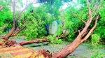 mumbai rains, mumbai rain damage, mumbai tress uprooted, tress uprooted due to heavy win, heavy winds in mumbai, indian express news