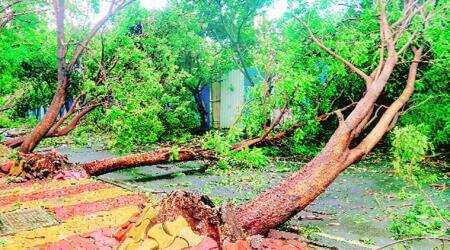 As BMC chops trees to clear roads, experts say replant uprooted ones wherever possible