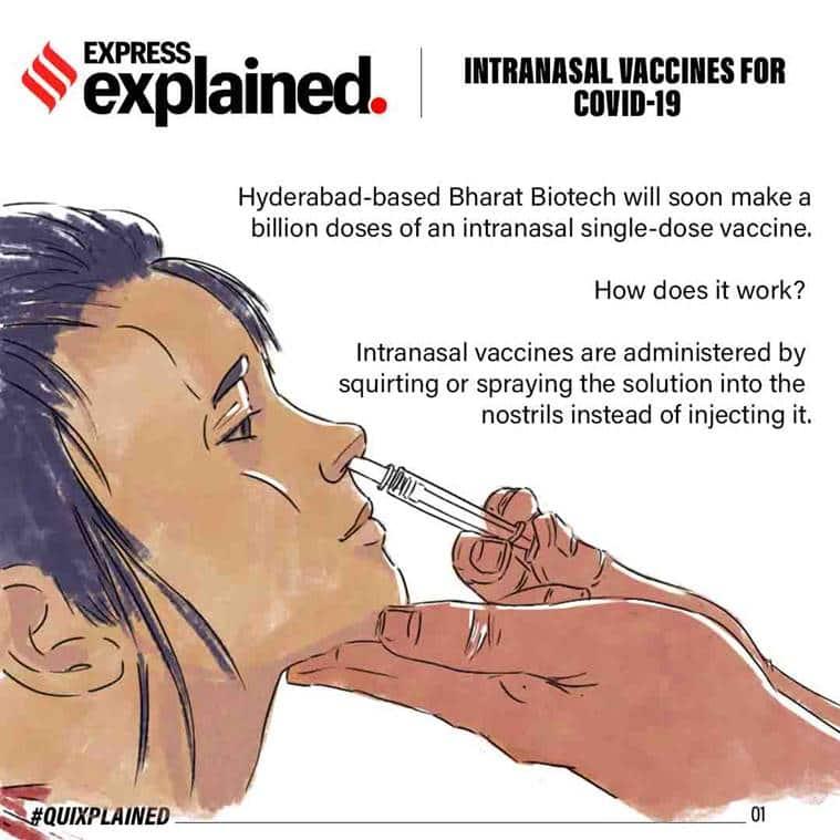intranasal vaccine, what is intranasal vaccine, intranasal vaccine india, what are nasal vaccines, bharat biotech, how does nasal vaccine work, coronavirus vaccine, indian covid 19 vaccine, indian express