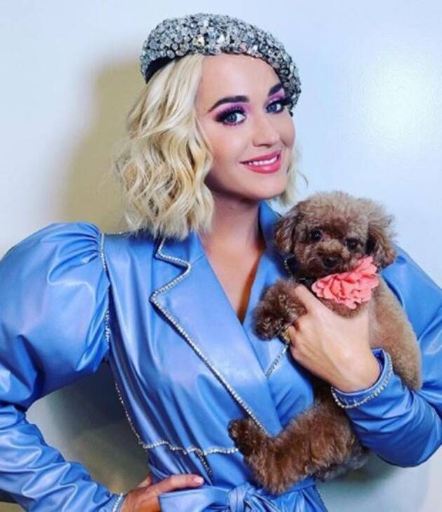 katy perry, katy perry photos, katy perry latest news, katy perry baby photos, katy perry husband, katy perry family