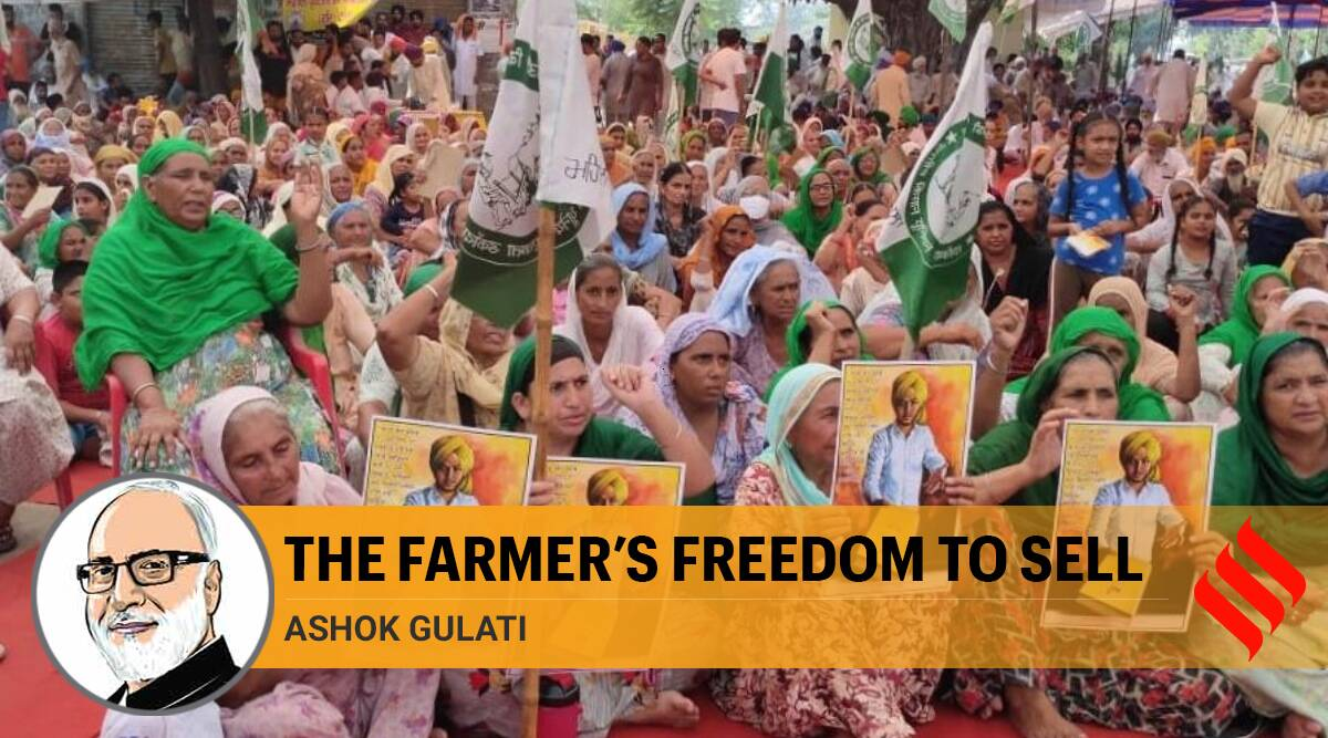 farm bills, farmer protests, farmer protests across India, Punjab farmer protests, Haryana farmer protests, congress on farm bills