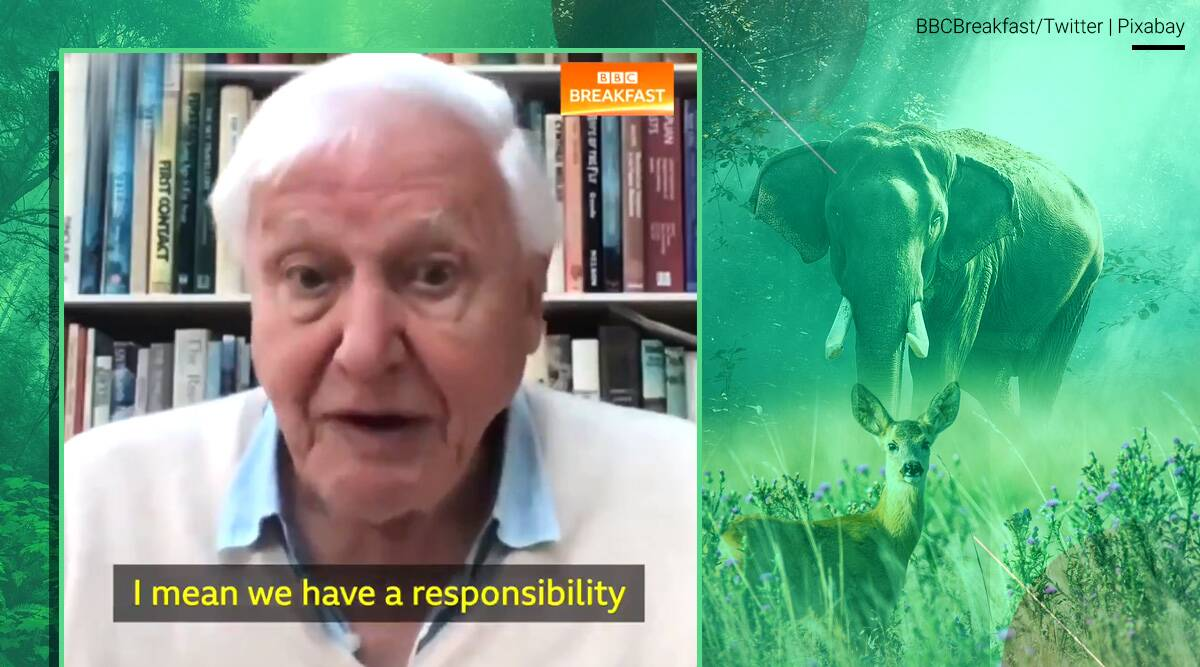 David Attenborough, David Attenborough environment interview, BBC interview, who is David Attenborough, trending news, indian express news