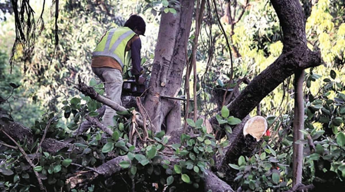 mumbai city news, mumbai child dies after tree branch falls on him, lower parel child death, Marwadi chawl child death, pandurang Budhkar Road child death, mumbai city news