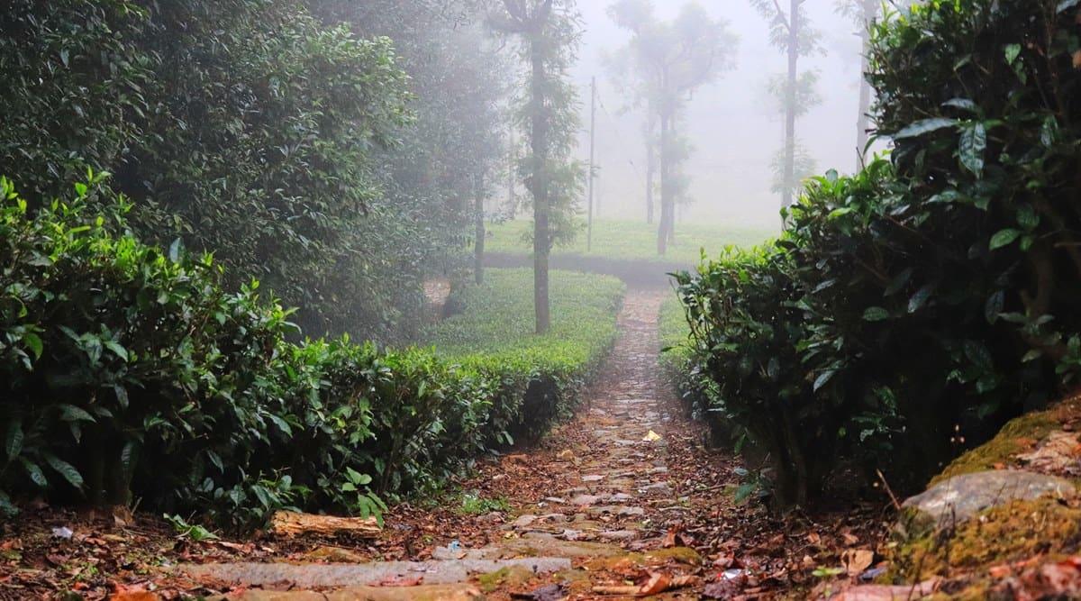 nilgiris, nilgiris landslides, kerala landslides, nilgiris tea plantation landslides, indian express