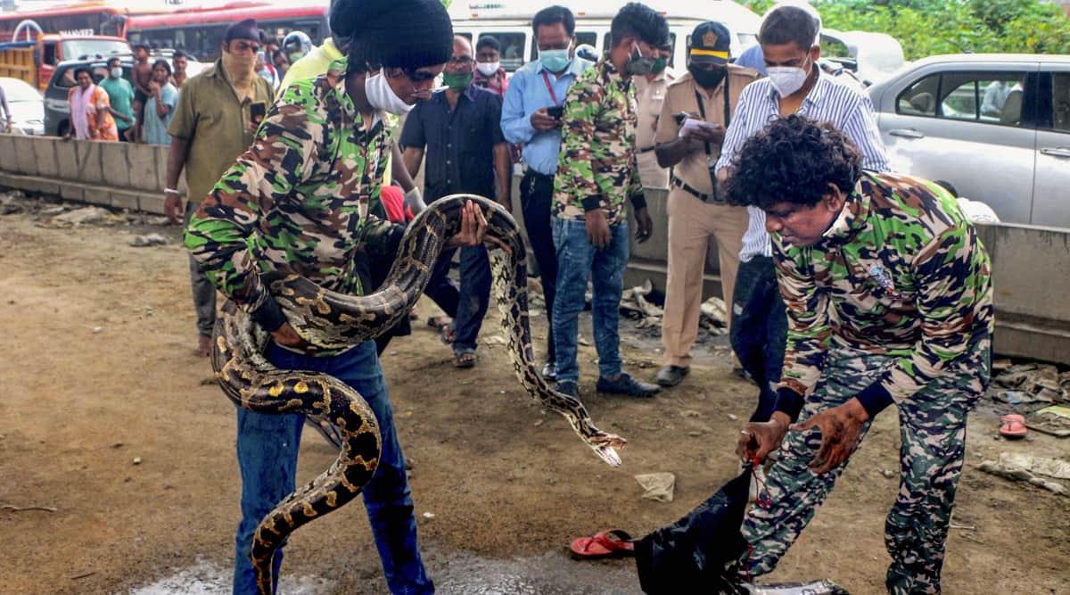 Snakes, Snake rescue, Python, Python rescue video, Mumbai, Python inside car, Viral video, Trending news, Indian Express news