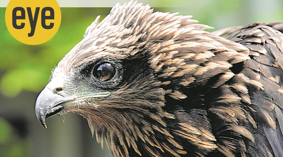 birds, bird watching, bird names, bird species, eye 2020, sunday eye, indian express, indian express news