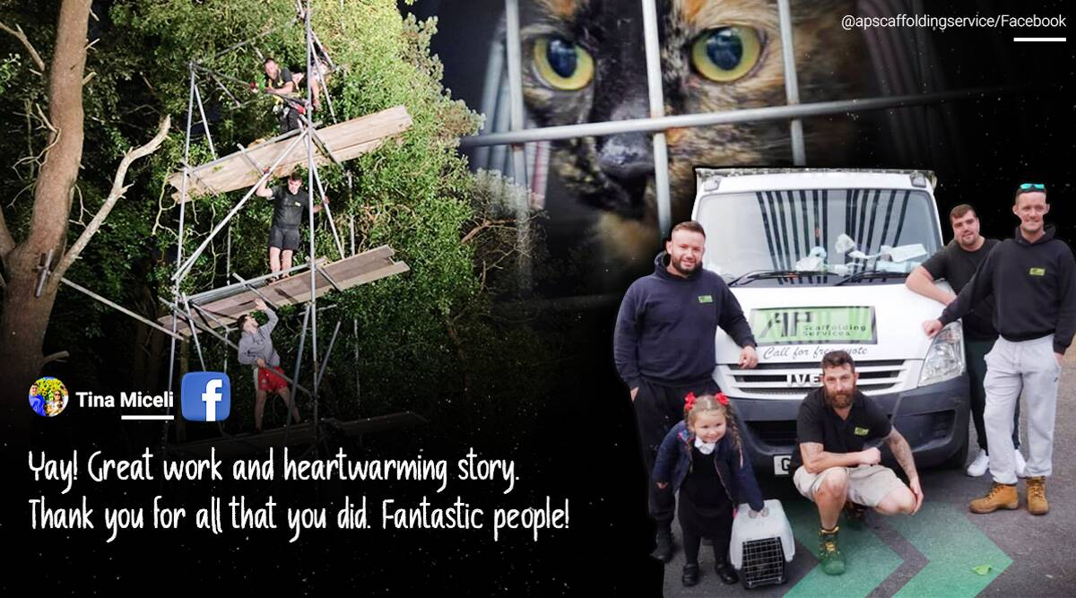 cat rescue wales, cat stuck in tree rescued, Scaffolding company, cat tree viral rescue, cat stuck on tree, trending news, indian express news