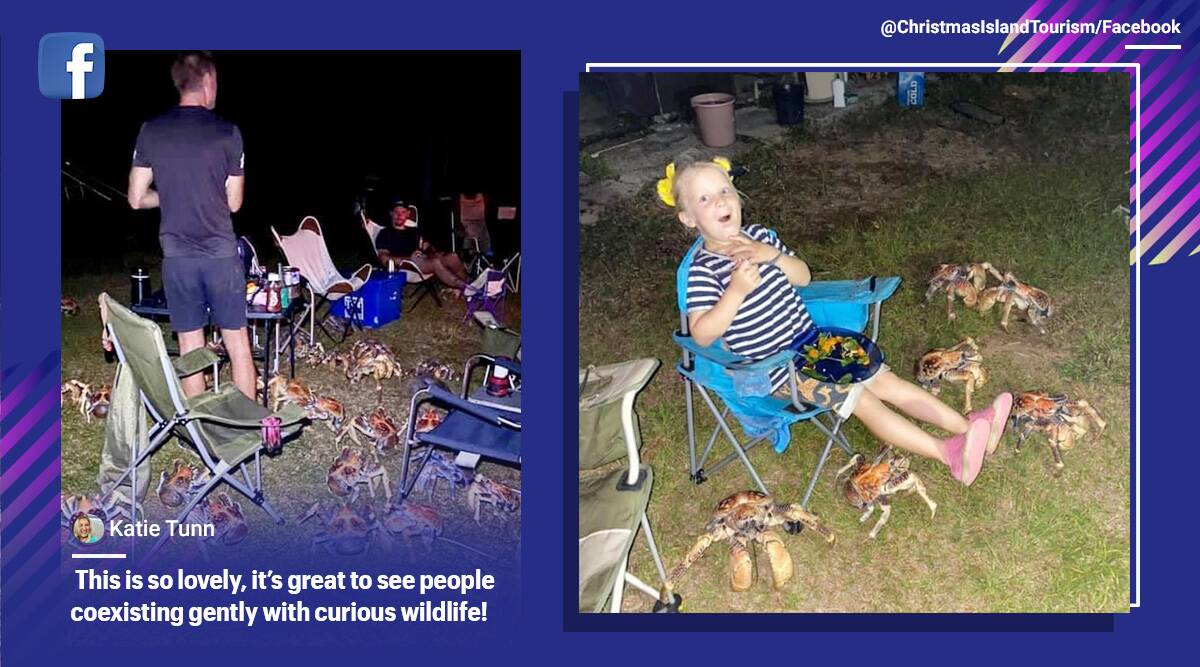 Crabs, Australia, Robber crab, big crabs invade family dinner, Coconut crabs, Christmas Island, crabs during BBQ dinner, Trending news, Indian Express news.