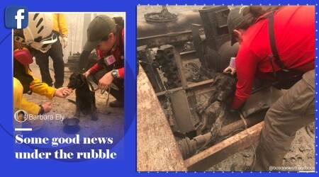 California wildfire, puppy rescue, wildfire puppy rescue, puppy rescue images, god rescue images, Butte County Sheriff's Office, California wildfire updates, Oregon wildfire, Trending news, Indian express news