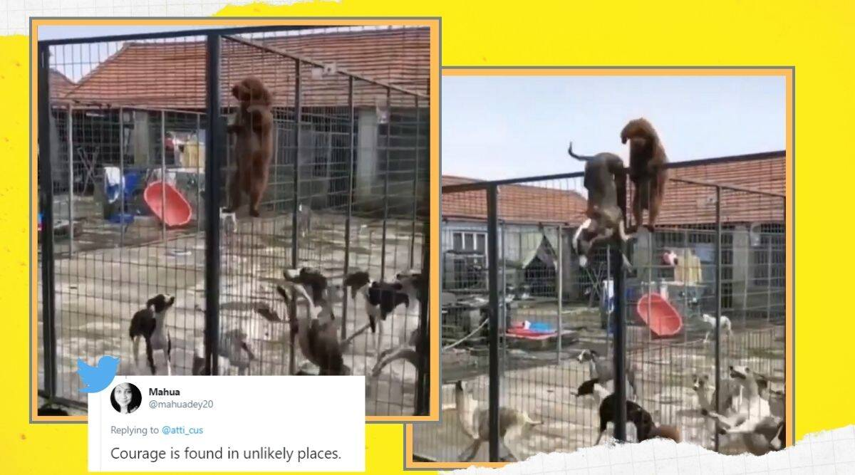 dog, dog in cage, dog escape cage viral video, dog escape cage trending, indian express, indian express news